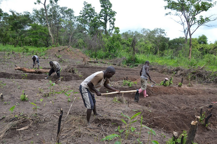 A community garden in Muhuya village in the Democratic Republic of Congo. A new book points to the high costs and low yields of agriculture in parts of Africa.  REUTERS/HABIBOU BANGRE