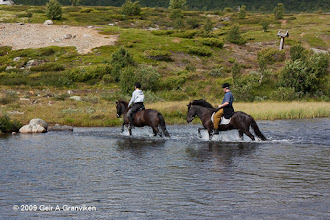 Photo: Horses from Hjerkinn Fjellstue & Fjellridning wading over the river by Hageseter