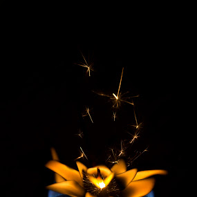 Fire Lotus by Yoseph Ismail - Artistic Objects Still Life ( lotus, stilllife, still life, photography, lotus flower, flower, fire )