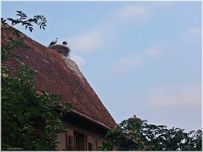 Photo: Rouffach .Las cigüeñas simbolo de de Alsacia ( Francia). http://www.viajesenfamilia.it/Alsacia.htm
