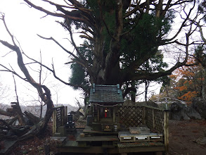 大杉神社と御神木