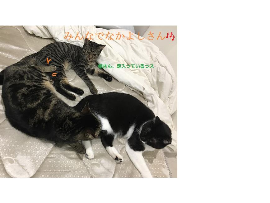 猫の多頭飼いのメリット・デメリットって?2