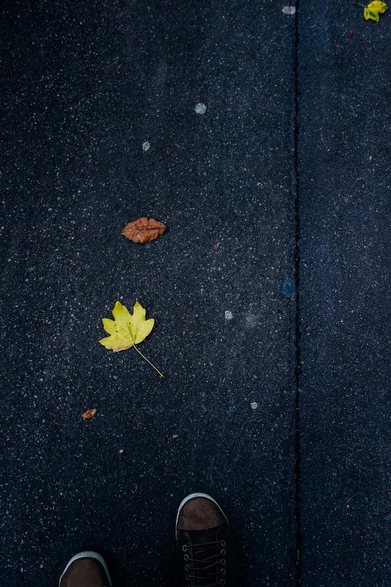 Inseguendo l'autunno di mariateresatoledo