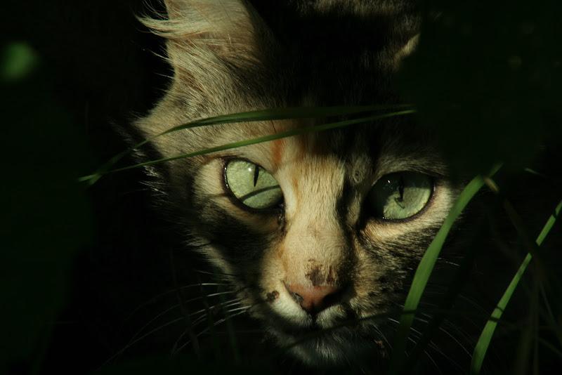 Eyes of The Tiger di Gp
