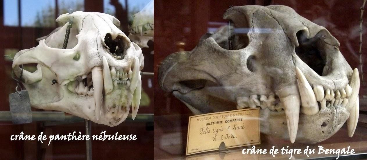 Galerie de Paléontologie et d'Anatomie comparée du Muséum National d'Histoire Naturelle, Paris - Tous droits réservés