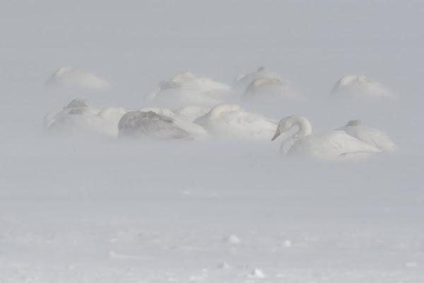 Frozen di Heisen.22