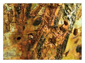 Photo: Eastern Sierras-20120716-419