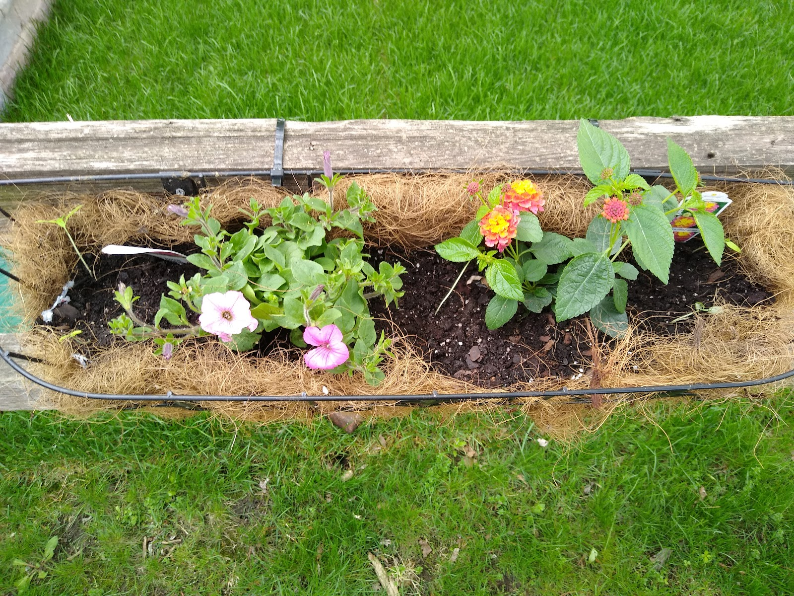 planting a fence basket picture