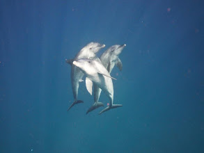 Photo: Common Dolphin