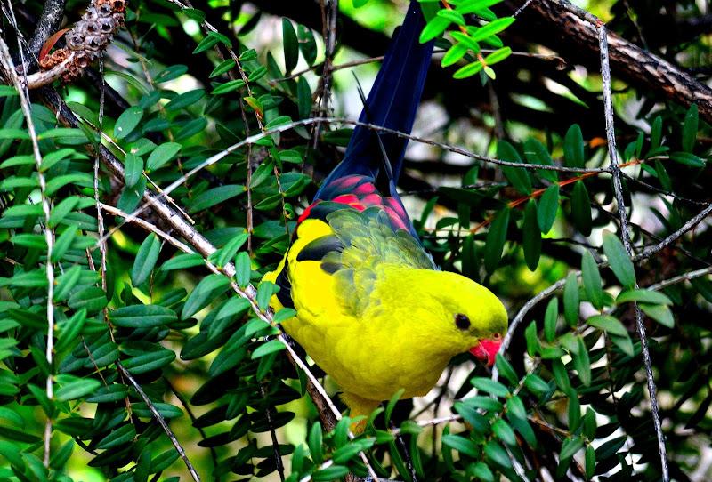 Yellow Bird  di stefano_angeli