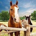My horse hotel resorts : train & care horses icon
