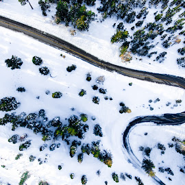 Curve by Hanif Khosravi - Uncategorized All Uncategorized ( dji, forest, lake tahoe, winter, drone photo, california, ice, drone photography, drone )