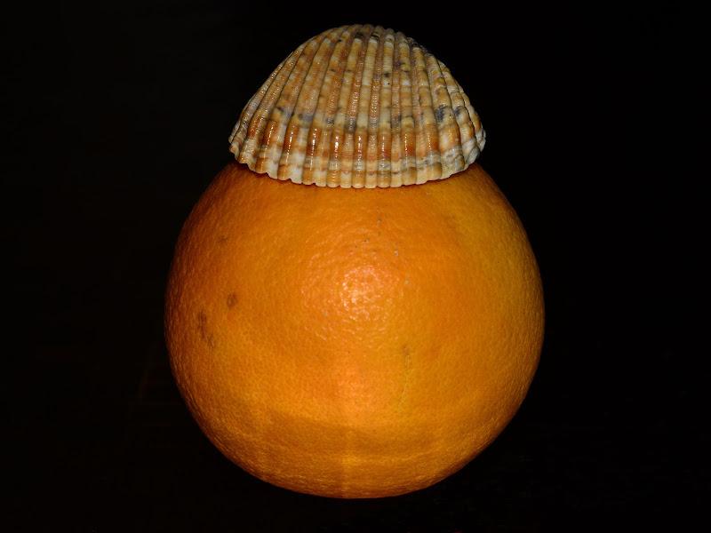 La grande perla orange di GVatterioni