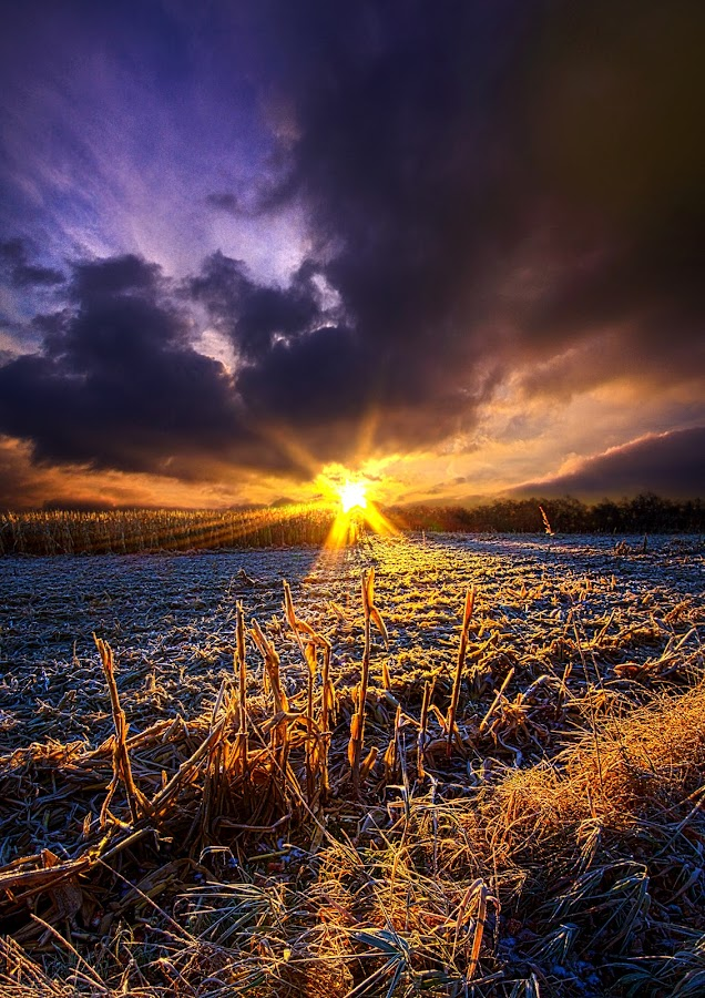 Caught Inbetween by Phil Koch - Landscapes Sunsets & Sunrises ( vertical, summer. spring, photograph, frost, farmland, yellow, storm, leaves, love, nature, autumn, snow, flowers, flower, wind, orange, twilight, agriculture, horizon, portrait, environment, winter, season, national geographic, serene, floral, inspirational, natural light, wisconsin, phil koch, spring, photography, sun, farm, ice, horizons, rain, inspired, clouds, office, green, scenic, morning, wild flowers, field, red, blue, sunset, fall, peace, meadow, earth, sunrise, landscapes, corn field, , HDR, Landscapes )