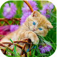 Cats Puzzle file APK for Gaming PC/PS3/PS4 Smart TV