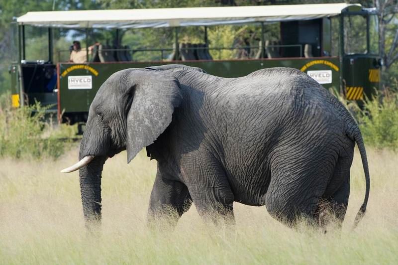 elephant-express---great-game-viewing-opportunities-on-board-e1.jpg