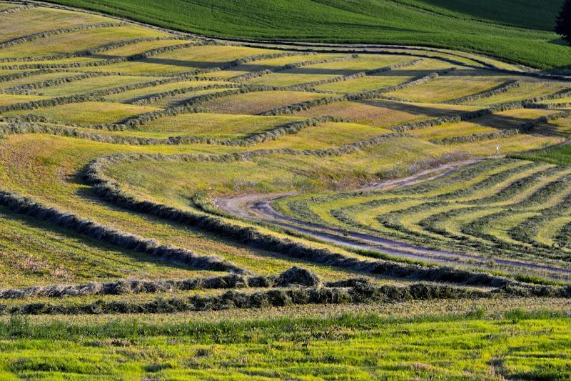 L'erba sfalciata di giuseppedangelo