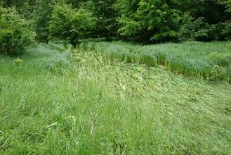 Photo: ide öntött ki a patak