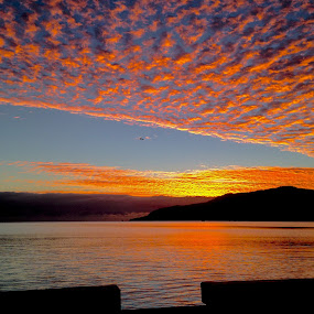 Flying high by Jane Sherwin - Landscapes Sunsets & Sunrises