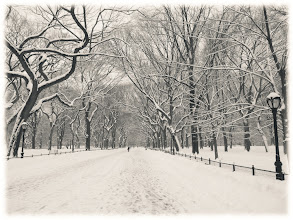 """Photo: """"Serenity...""""  New York Photography: Central Park Poet's Walk in the winter. #BWLandscapeWednesday   In preparing my photos for the various New York City holiday cards (http://goo.gl/nhiiJ ) that I designed this year, I finally went through the massive amounts of photos that I took in Central Park this past winter. New York City can be rather extreme in the winter months and last winter two different blizzards dropped a tremendous amount of snow on the city.  I love heavy snowfall and I found myself braving the super high wind gusts to wander around a mostly empty Central park during one of the two blizzards. I don't really recommend it and thinking back, it was a bit risky considering that the wind gusts were around 55 mph and higher. Wind gusts and trees don't make for the safest of combinations. However, I have never seen Central Park in such a serene state.  The only people who were in the park that day were small amounts of people who lived in the surrounding neighborhoods, brave tourists and intrepid photographers with giddy expressions on their faces. I could probably count on both hands the number of people I encountered and I ended up covering most of the park on foot that day (I was never so happy to get home and drink hot chocolate that evening).  This part of Central Park is known as The Poet's Walk or Literary Walk. The reason why this part of the park is known as Poet's Walk and/or Literary Walk is because at the very end of this section, several statues of famous writers line the path. It's at the southern end of a section called The Mall.  The Mall is only straight line in Central Park and the trees that line it are its crowning and most distinctive feature. They are American elm trees and are the largest and last remaining stands in all of North America. Over the years, other large grouping of American Elm trees have been destroyed by Dutch Elm disease but Central Park's conservancy has saved a majority of the remaining trees in the park desp"""
