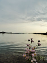 Photo: Pink flowers by a lake at dusk at Eastwood Park in Dayton, Ohio.