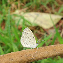 Tiny Grass Blue or Gaika Blue