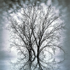Clouds Overhead by Yaz Hawkins - Digital Art Places ( water, tres, parks, landscape, digital, manipulation )