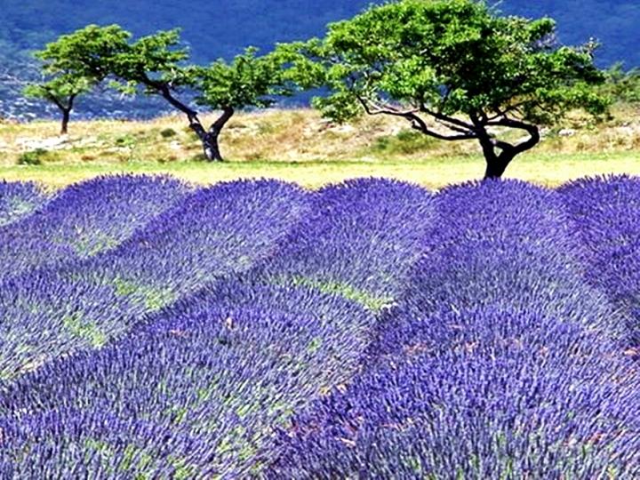 Color de Provence di mayoplast