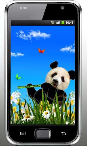 Panda Pretty LWP 2015