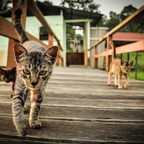 Forever Alone by Mohd Nazeerul - Animals - Cats Portraits ( cats, 2013, tourism, tasek merimbun, brunei )