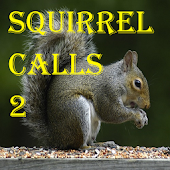 Squirrel Calls 2