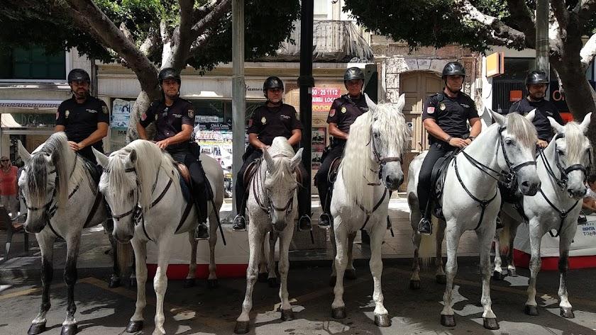 La unidad de caballería, esta mañana en el Paseo de Almería.