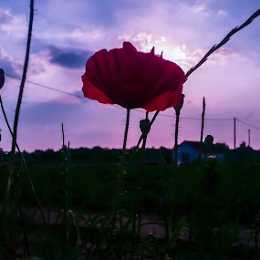 Lone by Antonio Knezevic - Flowers Flowers in the Wild ( sky, purple, lonely, unreal, flower )