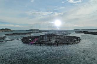 Photo: Salmon farming