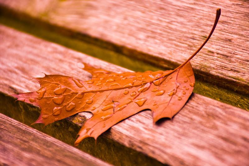Autumn color di mary_bassi