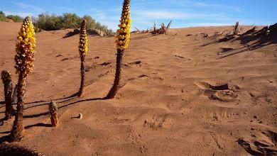 Photo: Rains bring a flowering desert