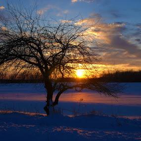 Winter Sunset by Kellie Prowse - Landscapes Sunsets & Sunrises ( winter, tree, sunset, snow, landscape )