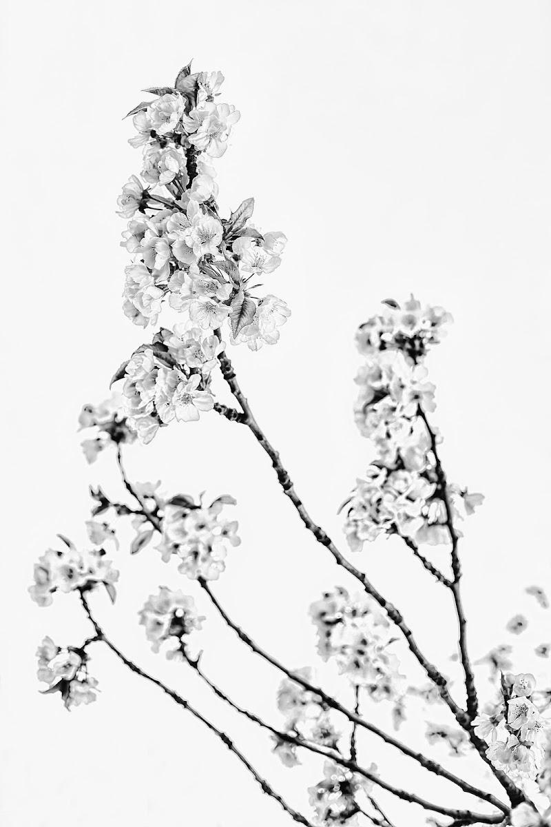 Springinblack&white di utente cancellato