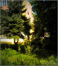 Photo: Turda - Calea Victoriei - Bloc: B17, Scai, Crăpușnic (Cirsium vulgare L) - 2019.08.13