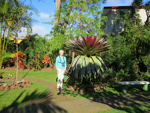 Photo: Pat gives scale to an Imperial Bromeliad.