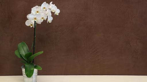 mur-beton-cire-enduit-decoratif-revetement-construction-neuve-les-betons-de-clara-faq