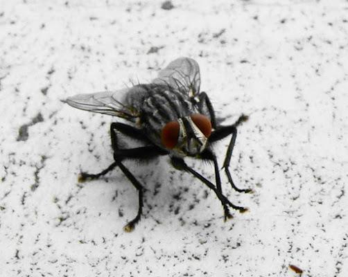 Bella anche la mosca di *@ndrè*