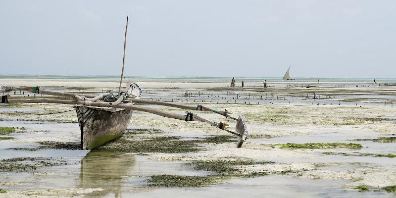 Zanzibar, Oceano Indiano, bassa marea di alessandro54
