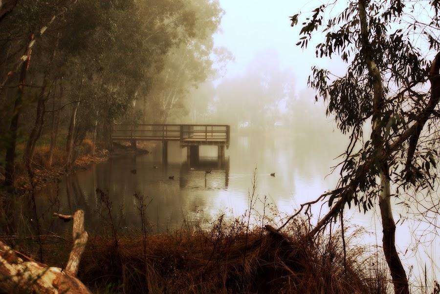 Fishing Bridge by Lorraine McCarthy - Landscapes Waterscapes ( water, reflection, winter, fog, trees, lake, bridge, landscape,  )
