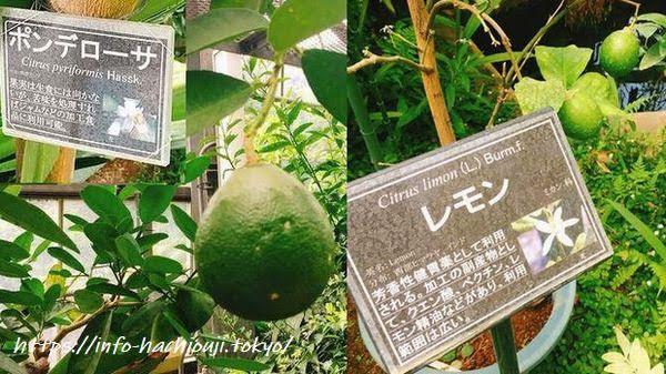 東京薬科大学薬用植物園