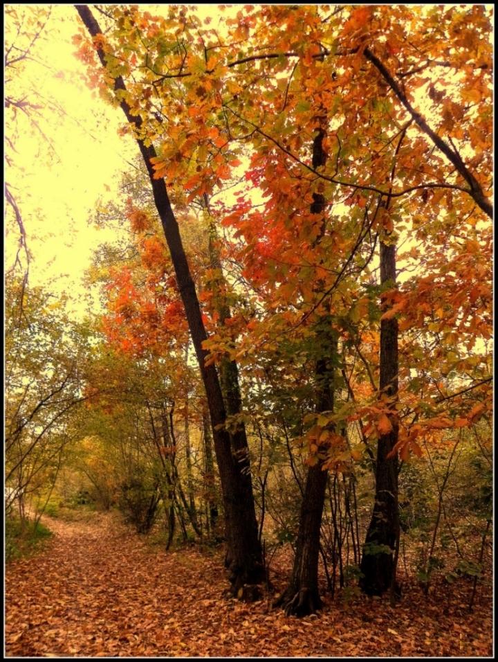 Colori d'autunno di Dade D2