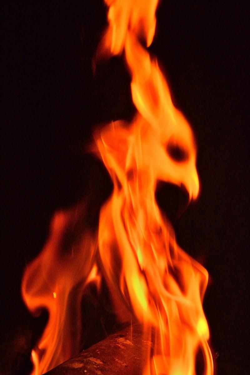 Cigno di fuoco...domestico di Alduccio