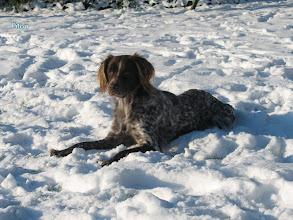Photo: FILOU in de sneeuw 2009