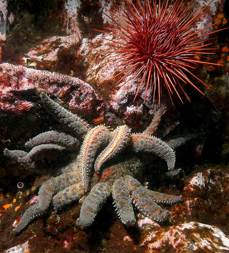 There are great scuba dive spots in the waters around Victoria Island in British Columbia.
