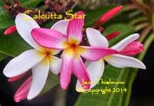 Photo: Calcutta Star